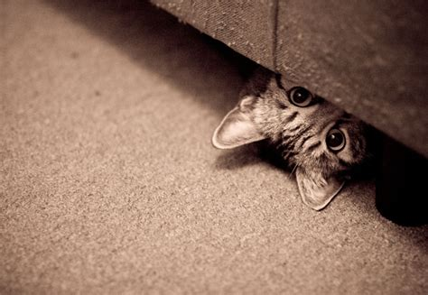 new cat hiding under bed exclusively cats veterinary hospital blog hello baby