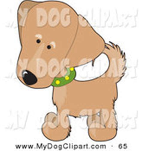 golden retriever puppy white spot on royalty free pedigree stock designs