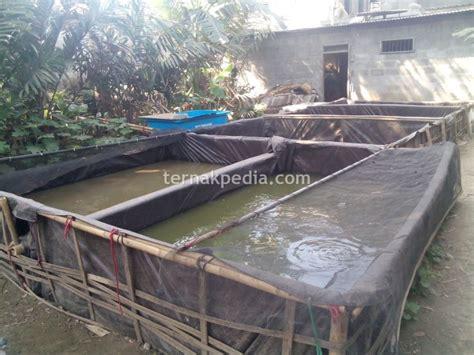Jual Kolam Terpal Tulungagung mengenal kelebihan dan kekurangan kolam ikan lele dari
