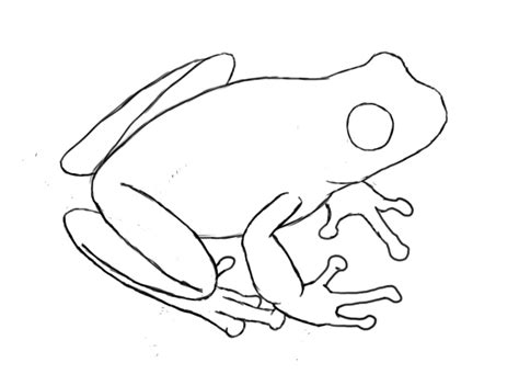how to draw a frog draw central