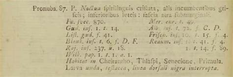 braut etymologie bestimmungshilfe des lepiforums noctua pronuba