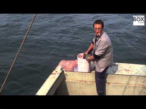 you re gonna need a bigger boat clip bigger boat whale thief doovi