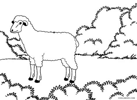 color sheep pictures of sheep to color www pixshark images