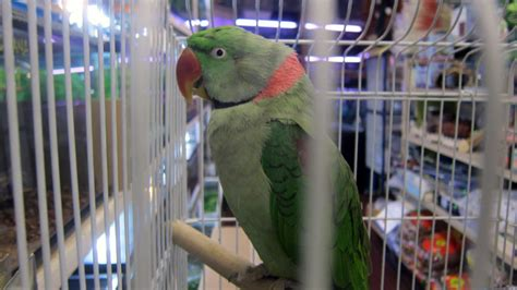 marta s pet shop toronto pet store pets birds