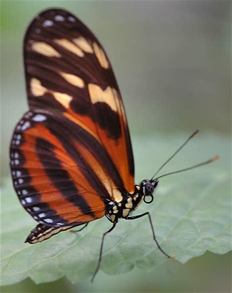 Fotogalerie Schmetterlinge Garten Der Schmetterlinge