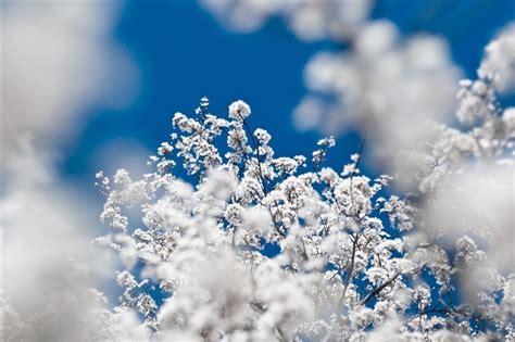 imagenes lindas de navidad con nieve consejos para hacer fotos con nieve haciendofotos com