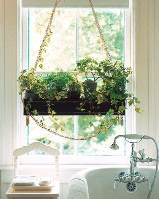 plants for a bathroom without window de 10 b 228 sta id 233 erna om hanging herbs p 229 pinterest