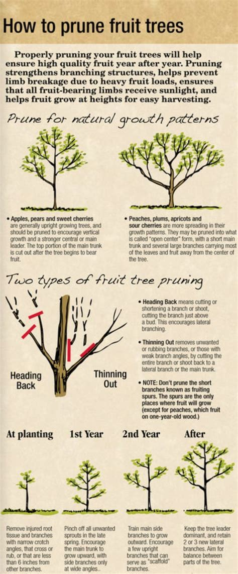 needed some fruit tree pruning information timing - How To Prune Fruit Trees