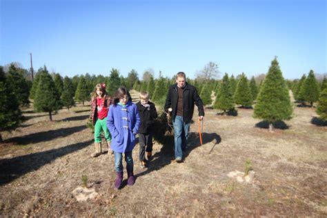 what kind of tree should i get plantation pines