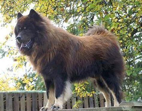 doppelhaushälfte zu kaufen gesucht wachhund zu kaufen gesucht in dedelstorf hunde kaufen
