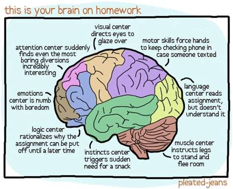 anatomy and physiology coloring workbook answers page 240 homework help strategies to reduce homework stress