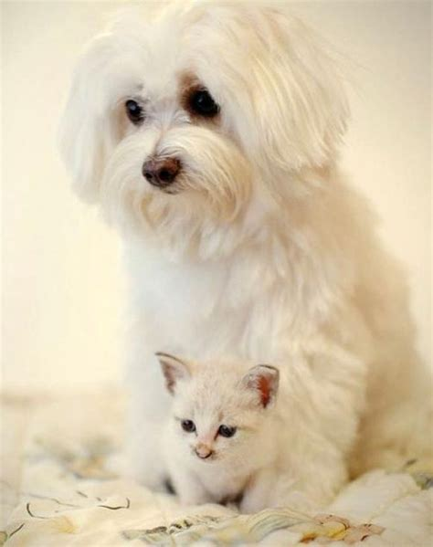 dogs that get along with cats 11 breeds that get along with cats cuteness