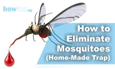 how to eliminate mosquitoes home made natural trap