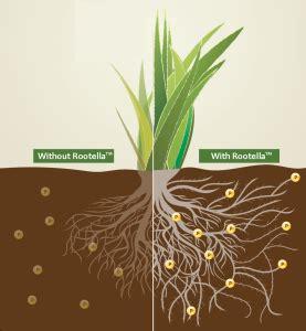 what is mycorrhiza?
