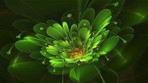 wallpaper of green flowers april green flower by frankief on deviantart