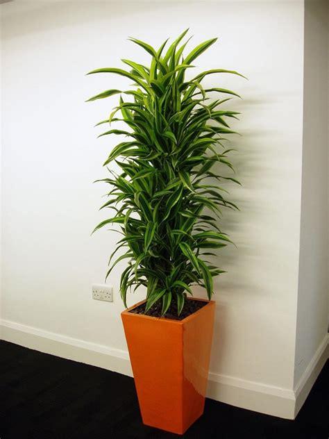 indoor plants  grow  sunlight