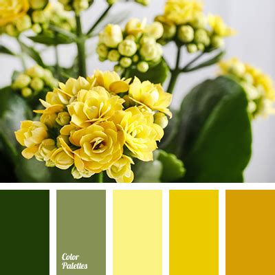 color palette  color palette ideas color balance
