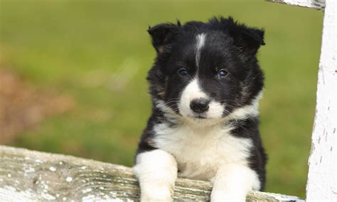 learn how to dogs how dogs learn 3 ways to change behavior the happy puppy site