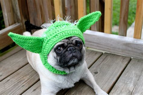 pugs with hats pickles the pug crochet hat model make handmade crochet craft