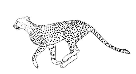 Free Printable Cheetah Coloring Pages For Kids Coloring Pages Cheetah