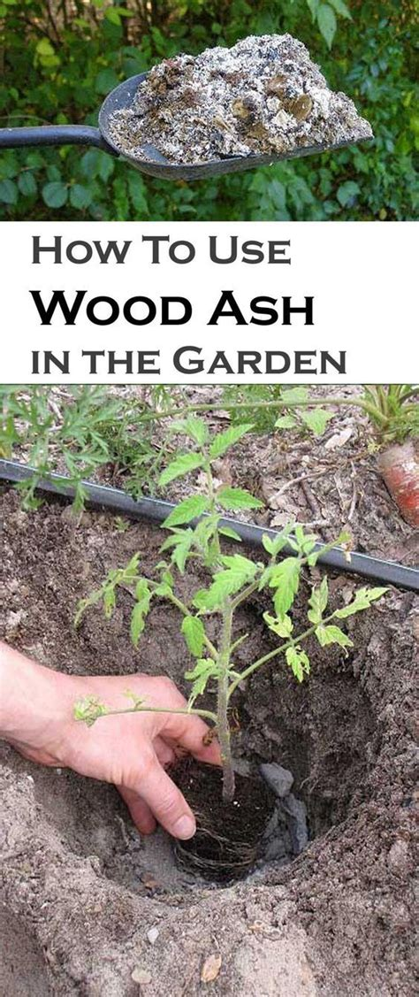 Wood Ashes In Garden how to use wood ash correctly in the garden
