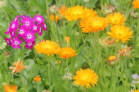 garten pflanzen ohne gießen 10 dinge die im garten leben getan haben sollte nabu
