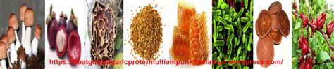 Agen Resmi Agaricpro obat penyakit ginjal agaricpro termulti uh khasiatnya