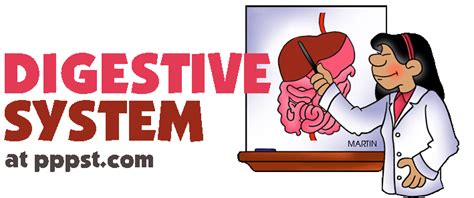 Digestive System Human Body Free Presentations In Digestive System Powerpoint