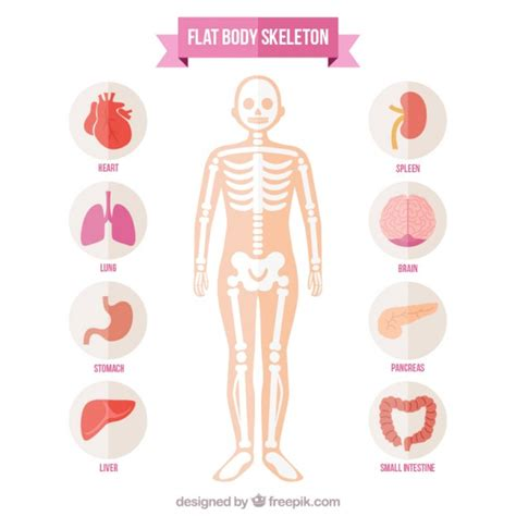 corpo umano organi interni milza milza foto e vettori gratis