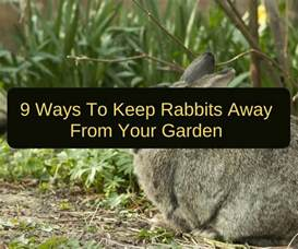 how to keep rabbits away from the garden backyard garden