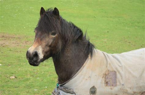 decke pferd kostenlose stock fotos rgbstock kostenlose bilder