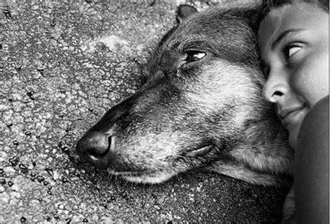 where do dogs go when they die where do dogs go when they die inside story