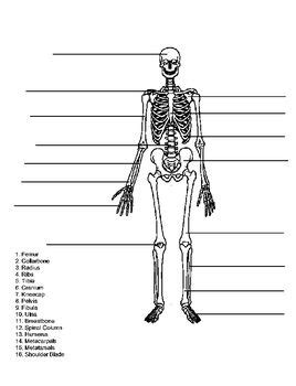 skeleton diagram quiz this quiz test is for 3rd 4th 5th grades or