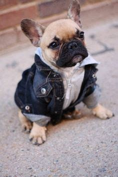 pug denim jacket pugs bulldogs on bulldogs pugs and pug puppies