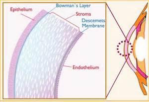 Signal Shed Hybrid Cornea