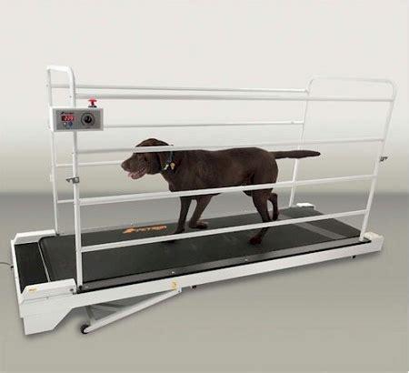 puppy treadmill petrun pr730 treadmill
