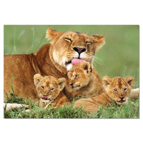 imagenes animales con sus crias leonas con sus crias imagui