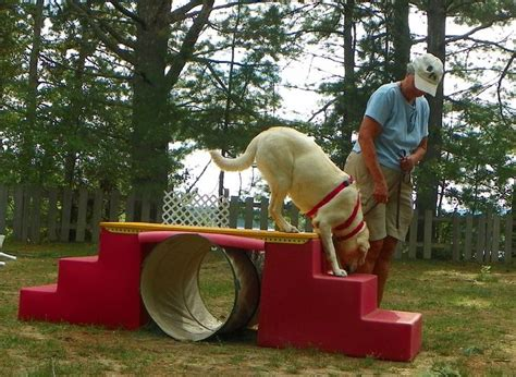 backyard obstacle course for dogs 117 best images about dog enrichment on pinterest dog