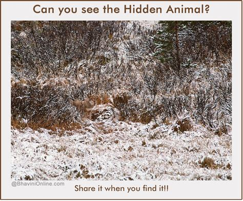 Can Find Picture Riddle Can You Find Any Animal In This Photo Bhavinionline