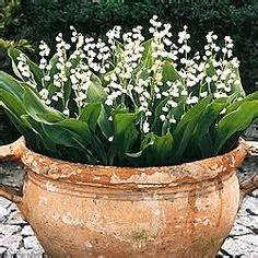shallow planter ideas images outdoor gardens