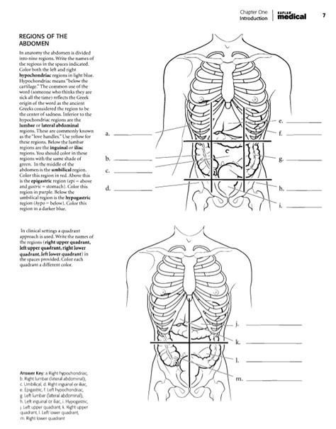 anatomy coloring book chapter 5 anatomy coloring book chapter 7 answers human
