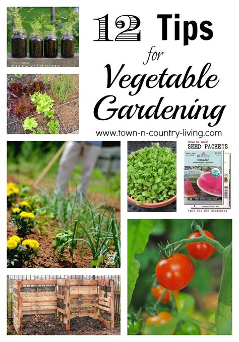 gardening tips 12 vegetable gardening tips town country living