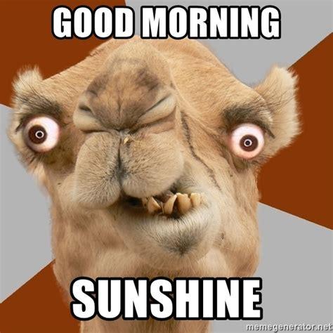 imagenes de good morning chistosas good morning sunshine crazy camel lol meme generator