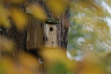 put  bird box nestboxes  rspb