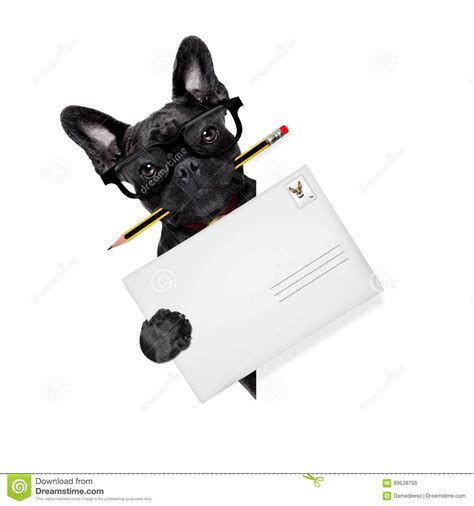 puppy delivery mail delivery post stock photo image 69538756