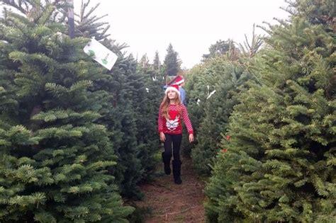 christmas tree farm how to u cut tree farms in sebastopol marin mommies