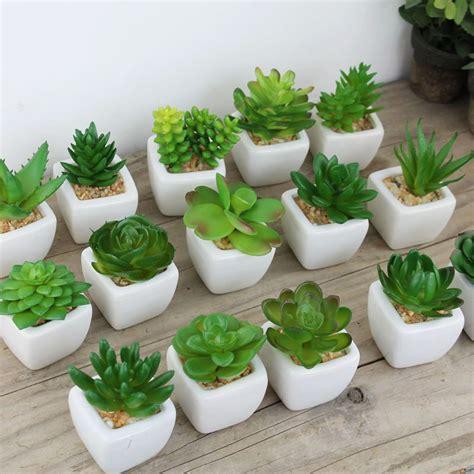 aliexpress com buy small potted bonsai mini succulent 60pcs decorative flower pots mini succulent plant bonsai
