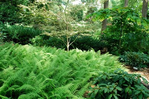 korean traveler fern eclectic landscape other metro by jay sifford garden design