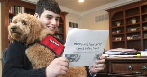 service dogs in laws service laws your rights when you own a service