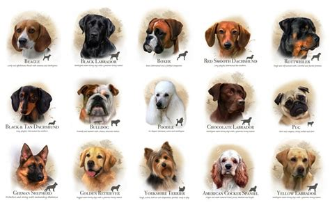 breeds with names breeds with names